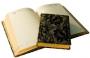 Ежедневник полудатированный Carmen, бежевый блок, золотой обрез, ляссе, карта, Happy Book